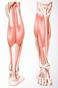 Сухожилия ног