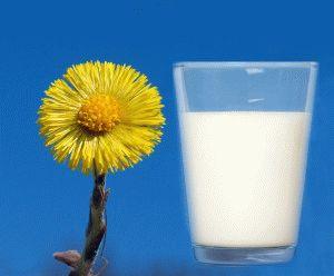 Мать-и-мачеха и молоко
