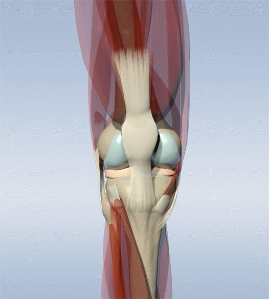 разрушение хряща коленного сустава