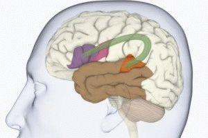 Повреждение мозгового участка