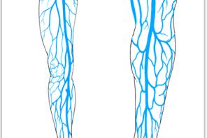 Лечение вен на ногах народными средствами