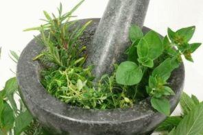 Травы от варикоза вен на ногах