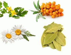 Лучшие лечебные растения