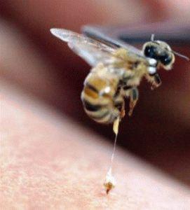 Лечение укусами пчёл