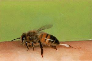 Пчелотерапия для ног