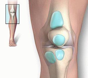 Бурса колена