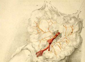 Мезентериальные артерии